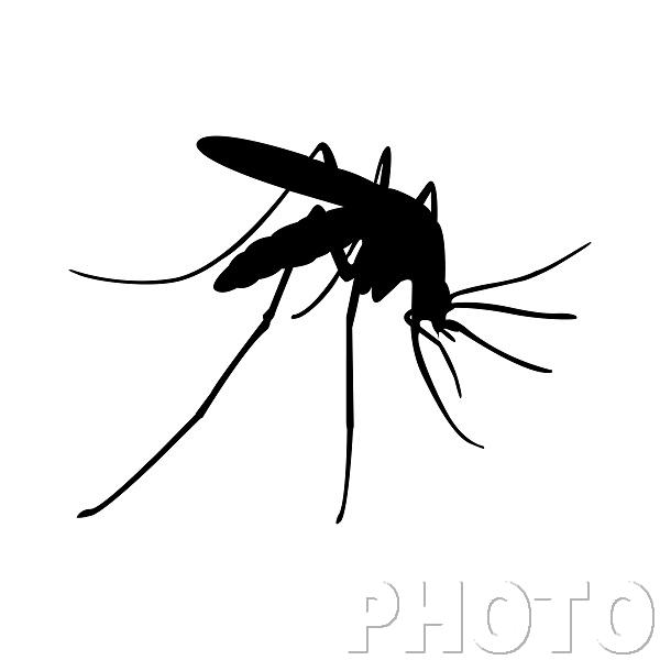—Pngtree—mosquito logo design template vector_3633777.png
