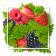비타민 엽산의 기능과 결필증